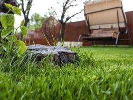 grünes Gras und Holzstumpf im Hof. Rasen nach dem Gießen und Mähen foto