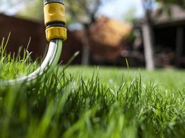 grünes Gras und Bewässerungsschlauch. ein Haus und ein Garten. ungeschnittenes Gras foto