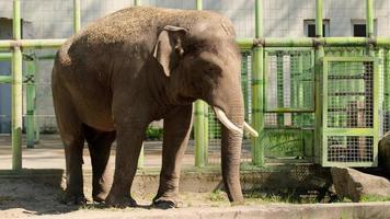glücklicher junger indischer Elefant im Zoo an einem sonnigen Tag foto