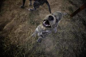 verlassene Hunde traurig foto