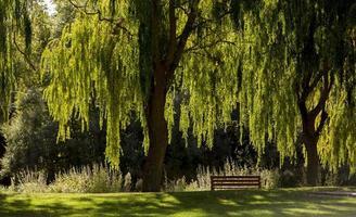 ein von Trauerweiden bevölkerter Naturpark in der Stadt Garray, Provinz Soria, Castilla y Leon, Spanien foto