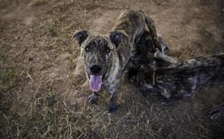 verlassene Hunde Haustier foto