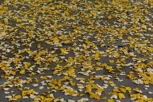 Herbstlaub auf dem Boden foto