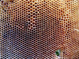 Hintergrund Sechseck Textur, Wachswabe aus einem Bienenstock foto