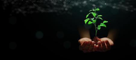 Hand hält junge Pflanze mit Erde auf abstraktem grünem Hintergrund mit Technologie-Drahtgitter foto