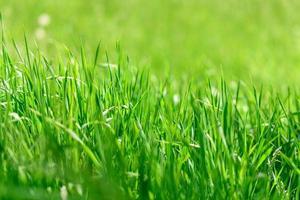 schöne grüne Pflanzen im Garten an einem warmen Sommertag foto
