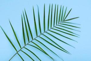 Blätter einer grünen Pflanze auf farbigem Hintergrund mit Platz für Text foto