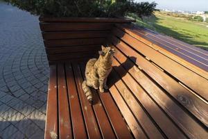 Landschaft mit roter Katze auf einer Holzbank foto