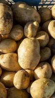 natürlicher Hintergrund mit frischen Kartoffeln foto