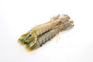 frische Fangschreckenkrebse isoliert auf weißem Hintergrund foto