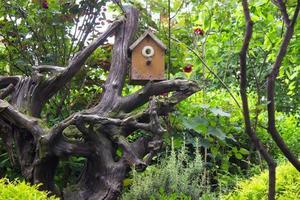 kleines Vogelhäuschen im Garten foto