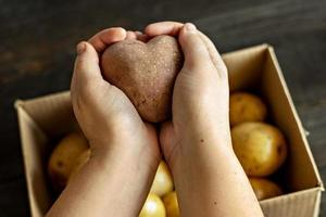 weibliche Hände, die eine herzförmige hässliche Gemüsekartoffel über einer mit Kartoffeln gefüllten Kiste halten. quadratisches, hässliches Essen. foto