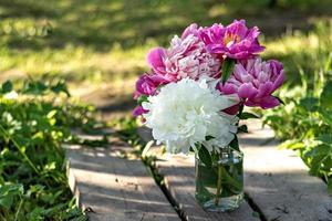 Ein Strauß großer weißer und rosa Pfingstrosen in einem Glasgefäß auf einer Holzbrücke im Garten. blühen foto