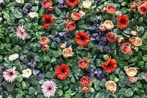 Hintergrund der künstlichen roten und rosafarbenen Chrysanthemen des Frühlings und der Pfingstrosen im Garten. Frühling. blühende Wand. foto