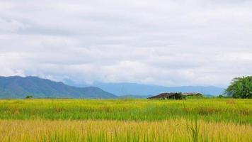 Reisfelder und Himmel mit Berg foto