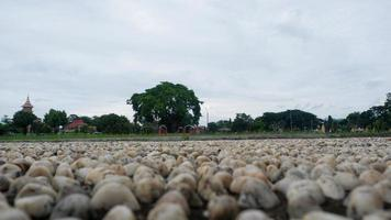 ein foto von der atmosphäre auf dem stadtplatz von kebumen am nachmittag, die verlassen wirkt