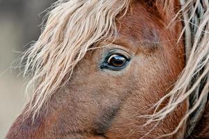 schönes braunes Pferd foto