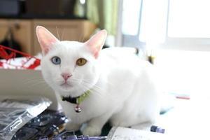 Katze im Haus foto