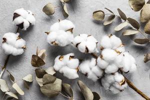 Draufsicht trockene Blätter mit Baumwolle. hochwertiges schönes Fotokonzept foto