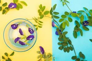 Zusammensetzung der Schmetterlingserbsenblume mit grünen Blättern foto