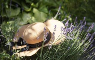 großer Strohhut in den Lavendelbüschen foto