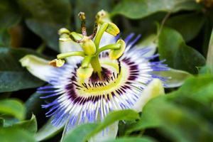 Detail einer Blume foto