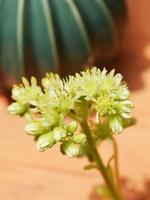 Nahaufnahme der grünen Pflanze foto