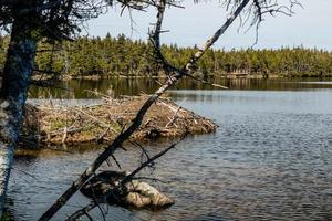 Aussicht von einem Spaziergang um den berryhill pond. Gros Morne Nationalpark, Neufundland, Kanada can foto