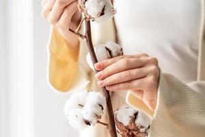 schöne Frauenhände, die einen Zweig von Baumwollblumen halten foto