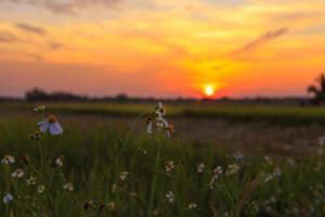 der blumen- und sonnenuntergangshintergrund foto