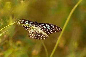 schöner Schmetterling auf Blume foto