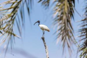 Vogel sitzt auf dem Ast, blauer Himmelshintergrund foto