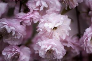 Nahaufnahme schöne Blumen Details Natur foto