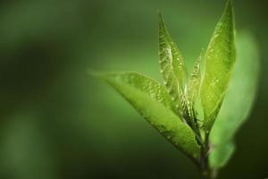 Nahaufnahme grüne Blätter Natur foto