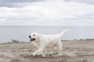 süßer Hund im Freien. süßer Smiley-Hund im Freien foto