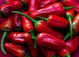 rote Chilischote scharfes Gemüse foto