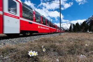 der rote zug des bernina express fährt im frühjahr bei pontresina vorbei foto