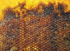 Tropfen Bienenhonig Tropfen aus sechseckigen Waben foto