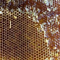 Tropfen Bienenhonig Tropfen aus sechseckigen Waben gefüllt foto