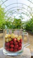 weiße und rote Erdbeeren in einem Glasbecher stehen in einem Gewächshaus foto
