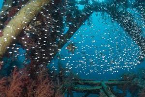 fische schwimmen im roten meer, bunte fische, eilat israel foto