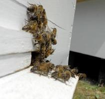 Hintergrund Sechseck Textur, Wachswabe aus einem Bienenstock gefüllt foto