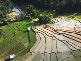 Reisfelder zu Beginn des Anbaus foto