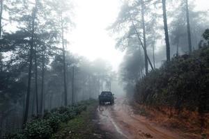 Straße in einem tropischen Wald, die Straße in den tropischen feuchten Wald foto