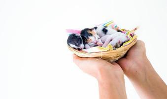 süße süße Haustierkätzchen foto