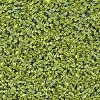 nahtlose grüne Grasbodentextur foto