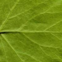 natürliches Pflanzenblattmuster foto