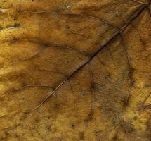 natürliche Pflanzenblätter Makro foto