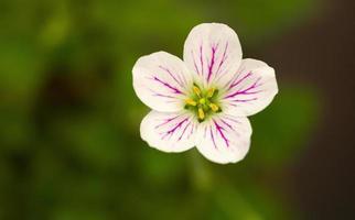 Makro Blumendetail foto