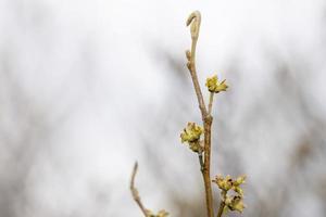 Nahaufnahme der Frühlingsblüte auf einem Ast foto